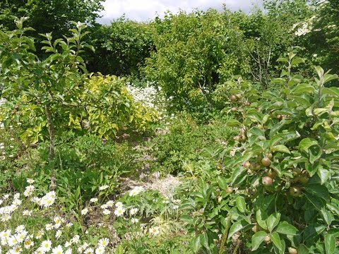 How to Make a Temperate Forest Garden : Part 1