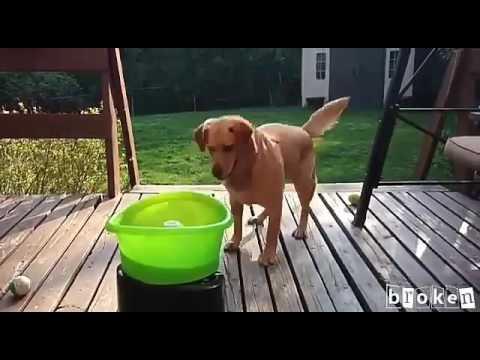 Smart Dog (Anjing Pintar)