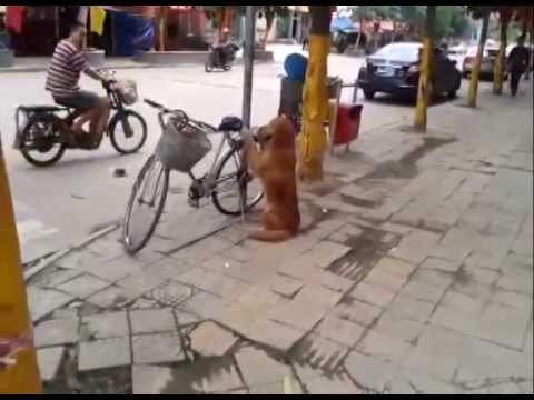 Best Dog Ever1 - Youtube