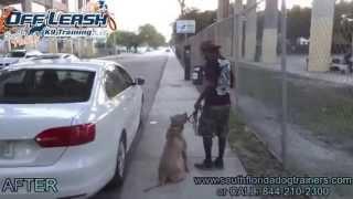 Aggressive Dog Fighting Dog