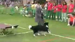 K9 Dog Dance Japanese Drunk