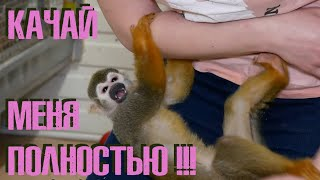 Учимся качать обезьяну правильно!