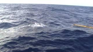 Pescaria Noronha - Cavala 23 Kg na linha de mão HD