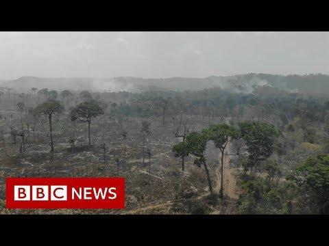 Amazon fire ban - BBC News