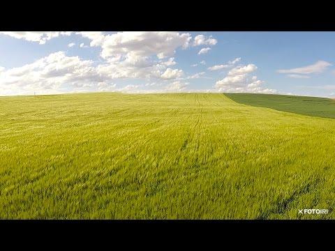 Campos de trigo y viento en la comarca de Los Oteros (León)