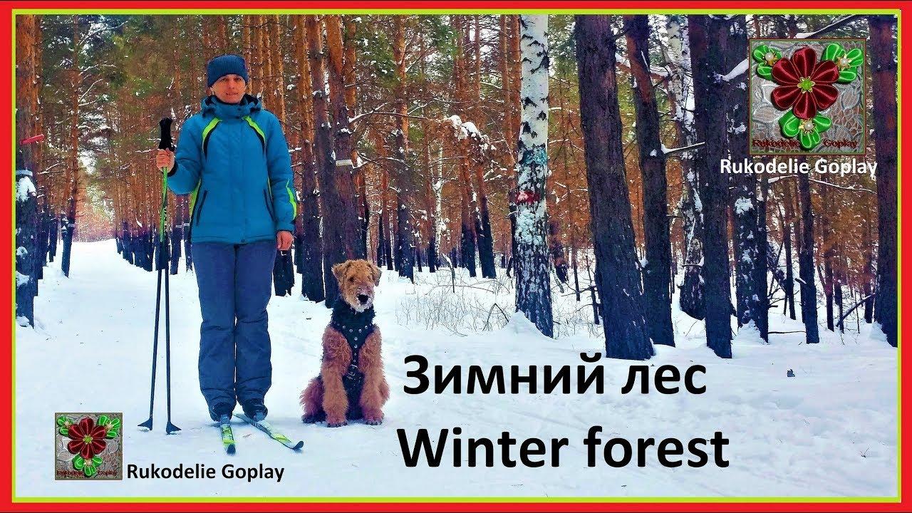 Зимний лес Winter forest Катание на лыжах собака эрдельтерьер /// Rukodelie Goplay RG