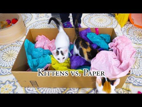 Kittens vs. Paper