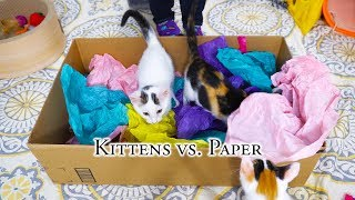 Kittens vs. Paper thumbnail