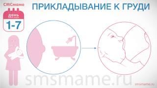 видео 7 рекомендаций для правильного ухода за кожей новорожденного