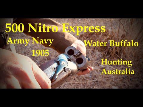 500 Nitro Express, Hunting Water Buffalo, Australia. Army-Navy 1905.