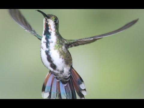 The Amazing Wildlife Of Trinidad & Tobago