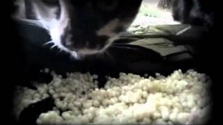 Коты едят перловку(Прикольный диалог).mp4