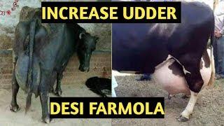 Gambar cover How to increase udder Cow & Buffalo's || How to increase milk || Desi farmola