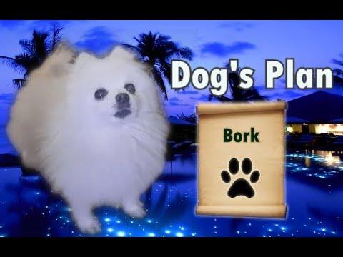 Dog's plan