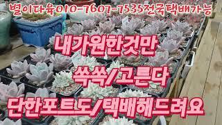 달샤벳/화이트샴페인/글램핑크  별이다육010-7607-…