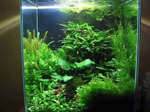 nano akwarium 30l nano aquarium diversa youtube. Black Bedroom Furniture Sets. Home Design Ideas