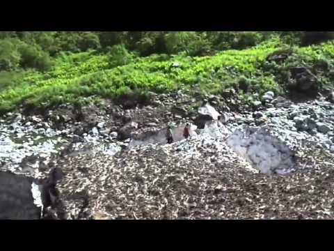 Mishmi Hills at Anjaw District in Arunachal Pradesh ,Parispolyphylla medicine