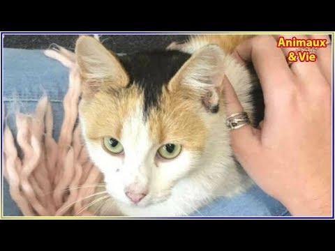 Elle trouve une chatte errante, mais quelques jours plus tard elle a une grosse surprise