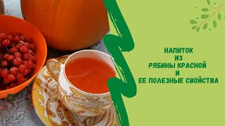 Напиток из рябины красной и ее полезные свойства