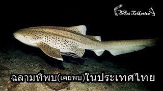 35 ปลาฉลามที่(เคย)พบในน่านน้ำไทย [Art Talkative]