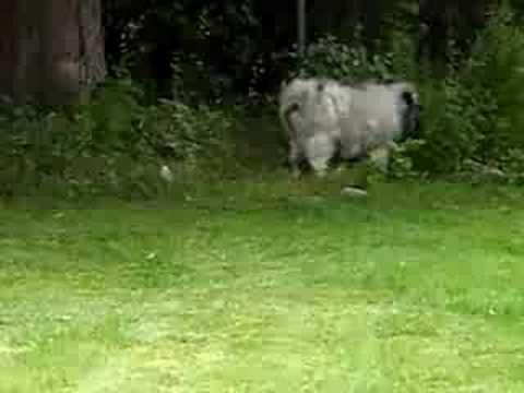 leo-follows-the-lawn-mower