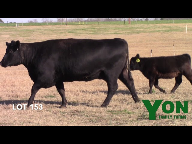 Yon Family Farms Lot 153
