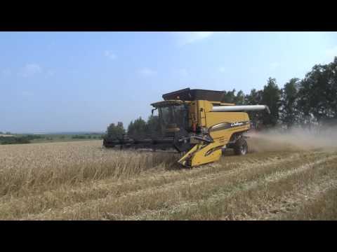 Уборка. Высокоурожайный сорт озимой пшеницы Бирюза  (25.07.2016)