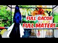 Kacer Gacor Full Materi Pancingan Supaya Kacer Cepat Gacor Hobi Kita  Mp3 - Mp4 Download