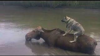 Уссурийск спасение животных с затопленного зоопарка. Первые кадры.