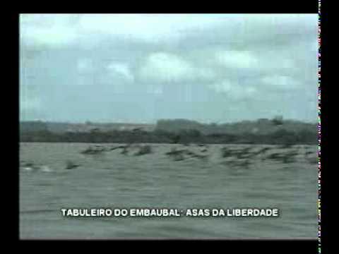 Mais de 300 mil tartarugas nasceram no Tabuleiro do Embaubal em dezembro
