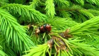 Жесткий секс насекомых // Hardcore insects