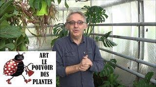 Conseils jardinage : Philodendron Monstera: comment faire l'entretien: Plante verte d'intérieur