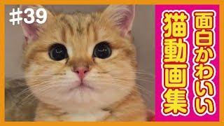 世界のおもしろ可愛い猫動画をまとめました! チャンネル登録お願いしま...