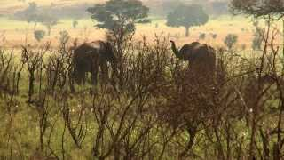 Uganda; Sustainable Tourism