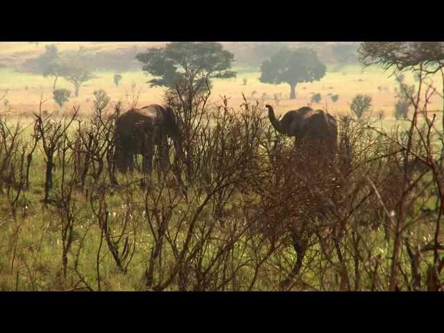 Uganda; Sustainable Tourism