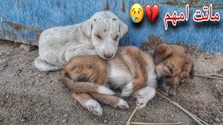 انقاذ كلبين صغار !! تسممت امهم 💔😢