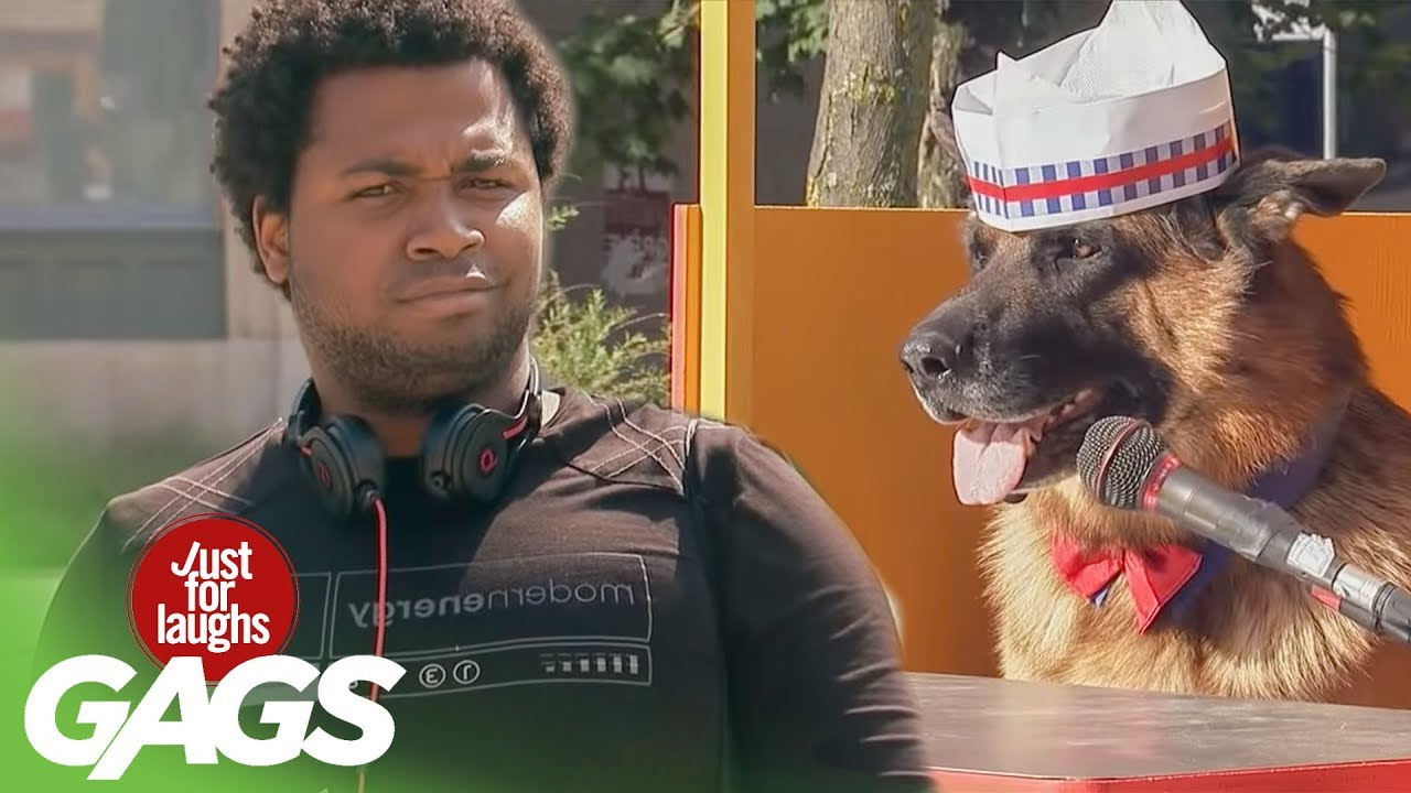 Dog Sells Hot Dogs