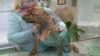 Debbie's Pet Grooming - Flushing Mi Recap