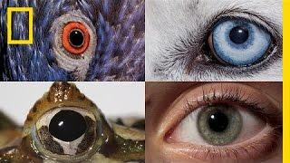 動物と人間の見え方の違い