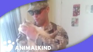 Cat eagerly awaits soldier
