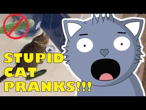 Stupid Cat Pranks!