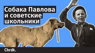 Собака Павлова и советские школьники