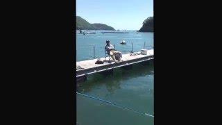尾鷲 錦漁港 タムちんのいたずら