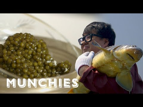 The World's Best Caviar, Now Made in China: MUNCHIES Presents