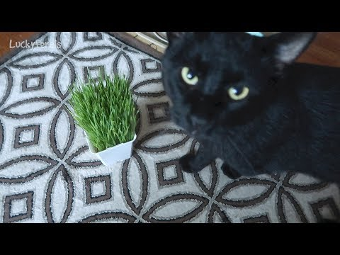 Boo Day 94 - Cat Grass Appetizers - Training And Socializing A Feral Cat