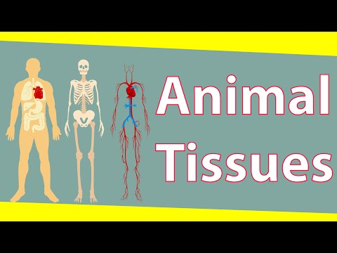 Animal Tissues & Its Types | Tissues | Biology | Science | LetsTute