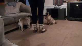 No More Pulling - Teach Your Dog To Walk To Heel