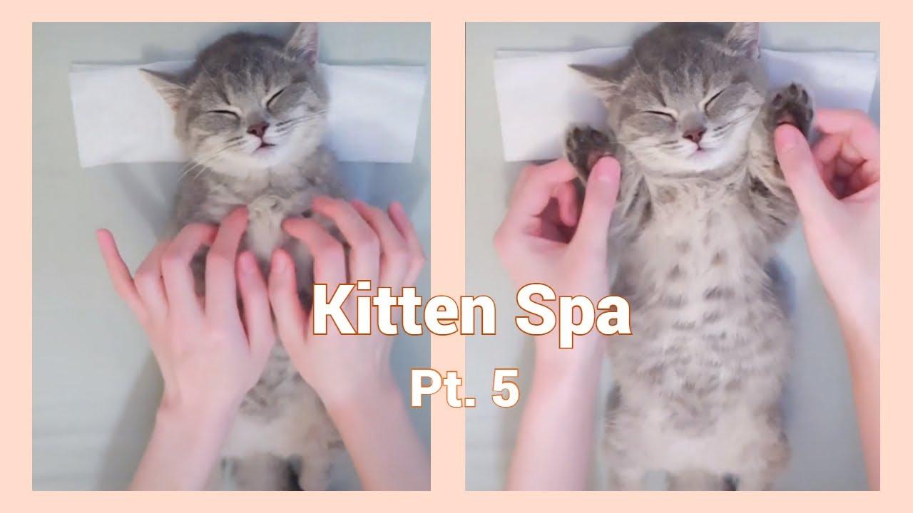 30 Minute Kitten Massage