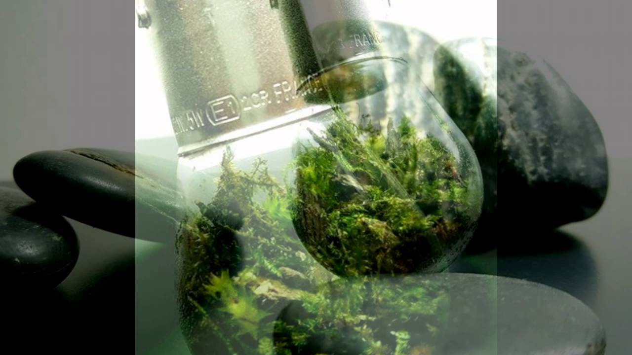 diy mini terrarium ampoule by kris aquari 39 o youtube. Black Bedroom Furniture Sets. Home Design Ideas