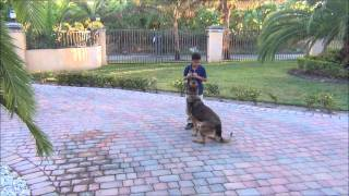This Video Previously Contained A Copyrighted Audio Track. Due To A Claim By A Copyright Holder, The Audio Track Has Been Muted.     Honey Family Protection Dog, K9 Enforcement Training